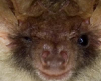 Charlotte Bat Control